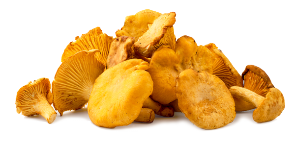 Pilze - Singles Essen auf Rädern